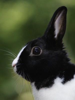 Plantbased Rabbit