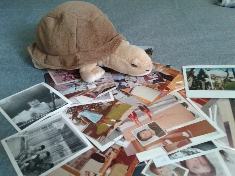 a-tortoise-and-some-photos