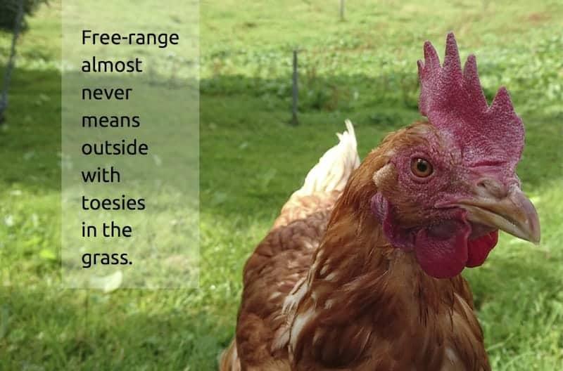 Plant-based diet - Free range
