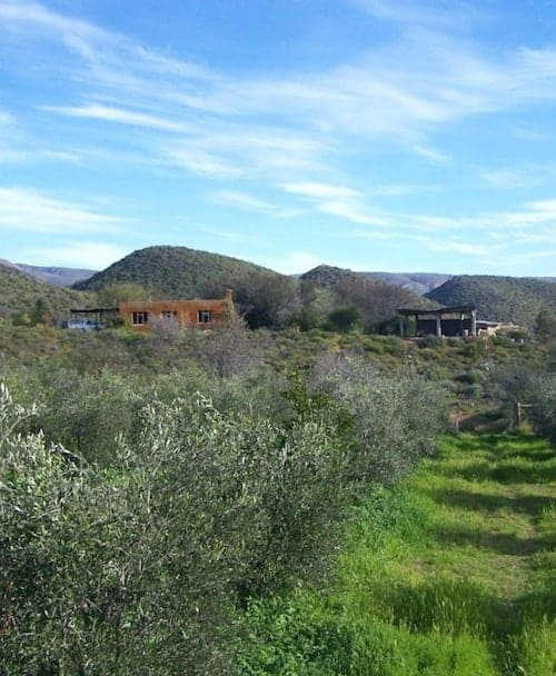 That Time We Agreed to 'House Sit' a Permaculture Farm