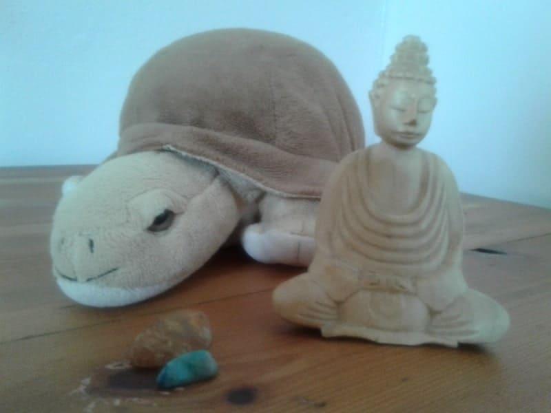 what we own stuffed tortoise