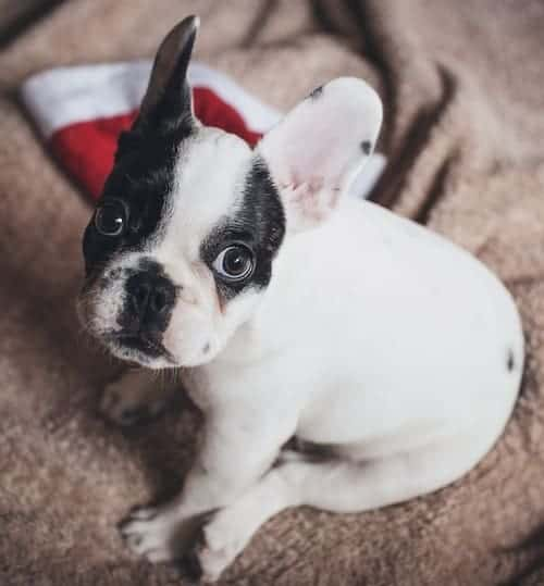 Why Pets Make Terrible Holiday Gifts