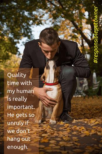 Responsible Pet Owner