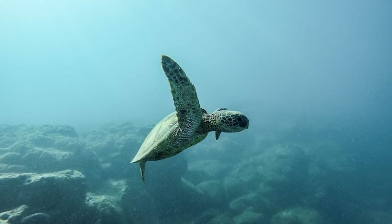 It's World Oceans Day. Let's Quit Our Addiction to Single-Use Plastic