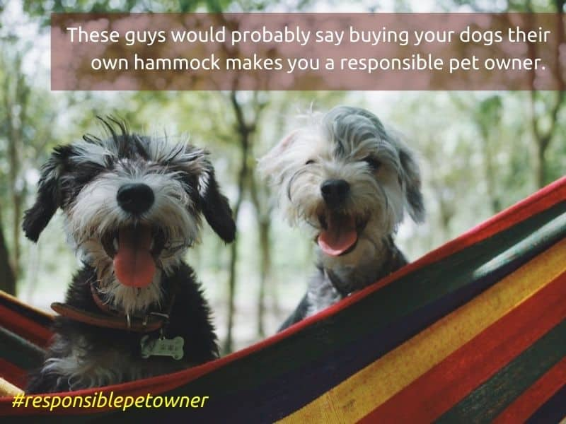 What Makes a Responsible Pet Owner