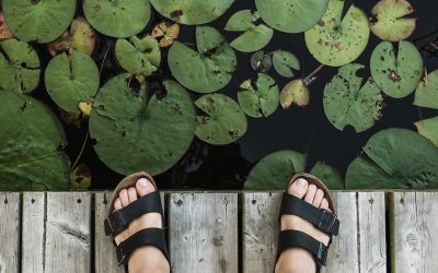Backyard Ponds: 5 Environmental Benefits You'll Love