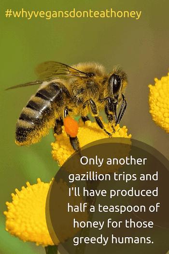 Honeybee on flower - why vegans don't eat honey